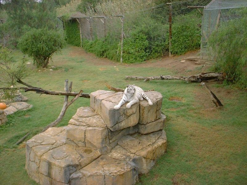 Ранчо диких животных Канго