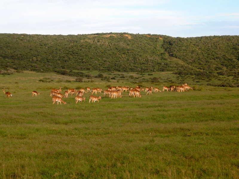 Природный резерват Шамвари