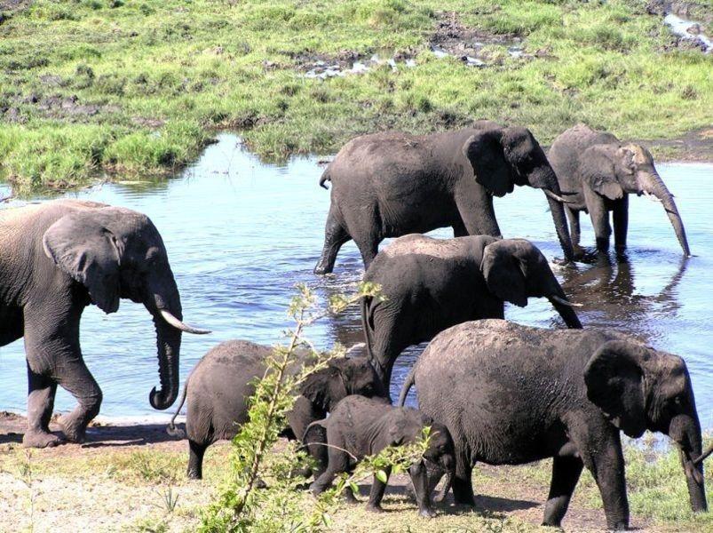 Слоновий парк Тембе