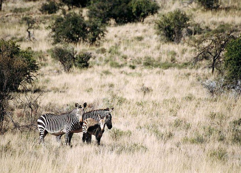 Национальный парк горной зебры