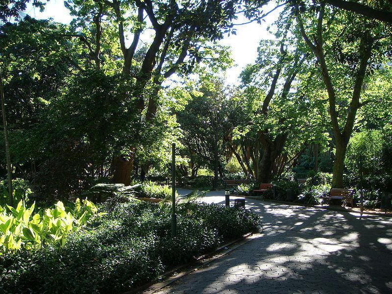 Сад компании