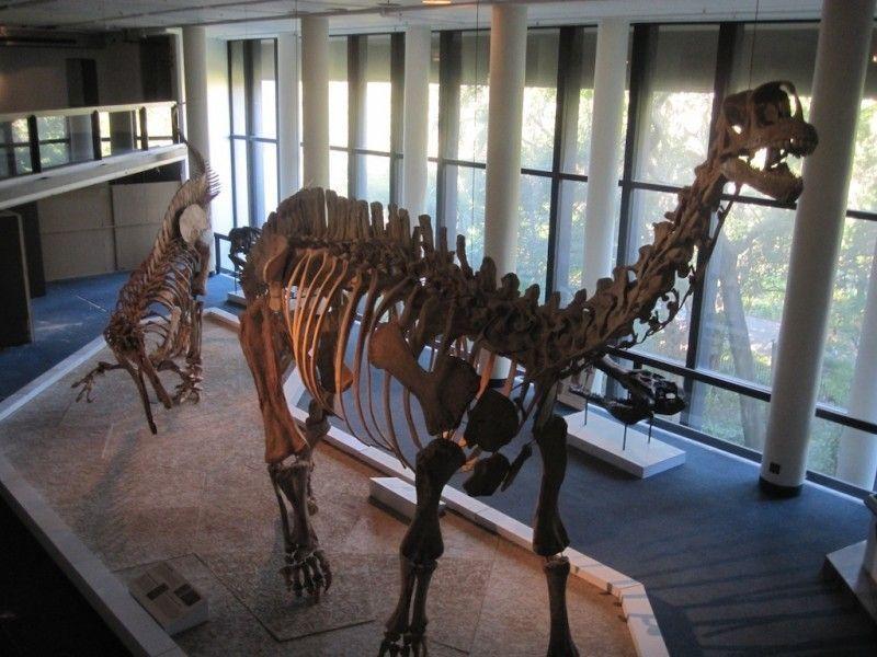 Южноафриканский музей