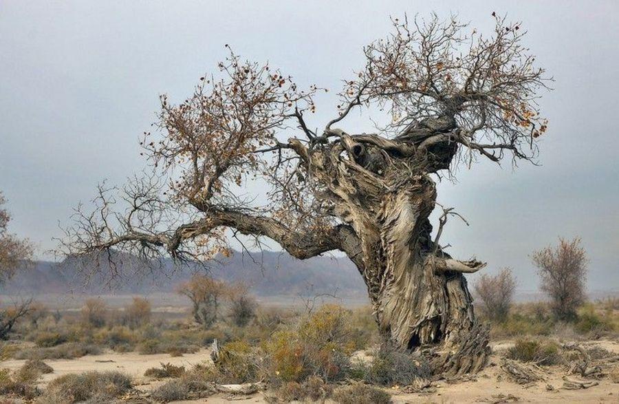 Национальный Парк Алтын-Эмель