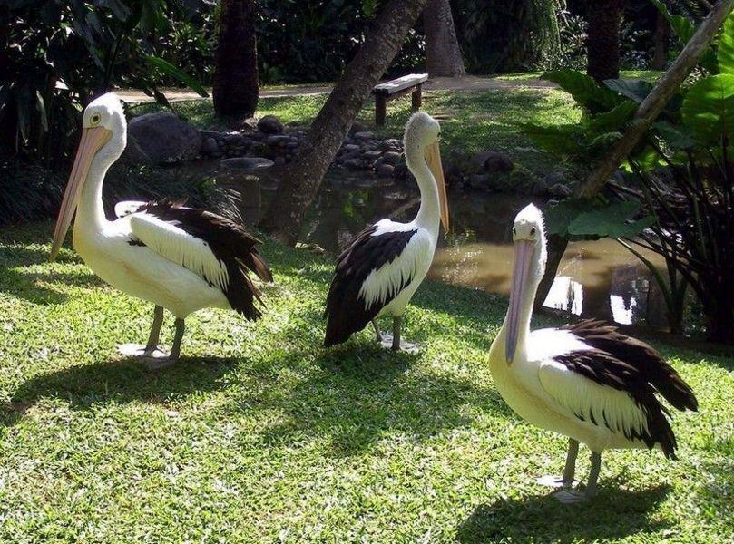 Птичий Парк и Парк Рептилий