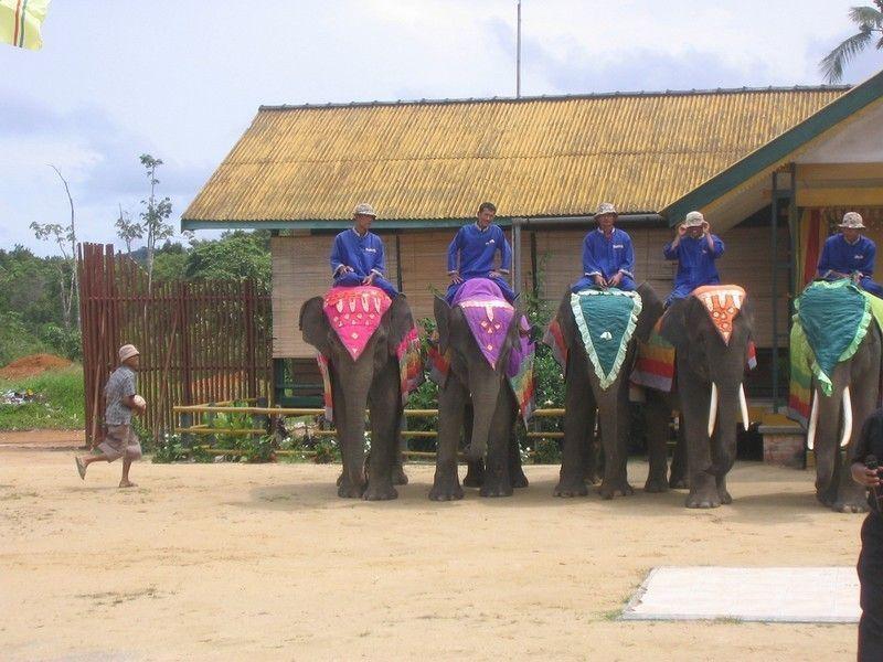 Парк слонов, Бинтан