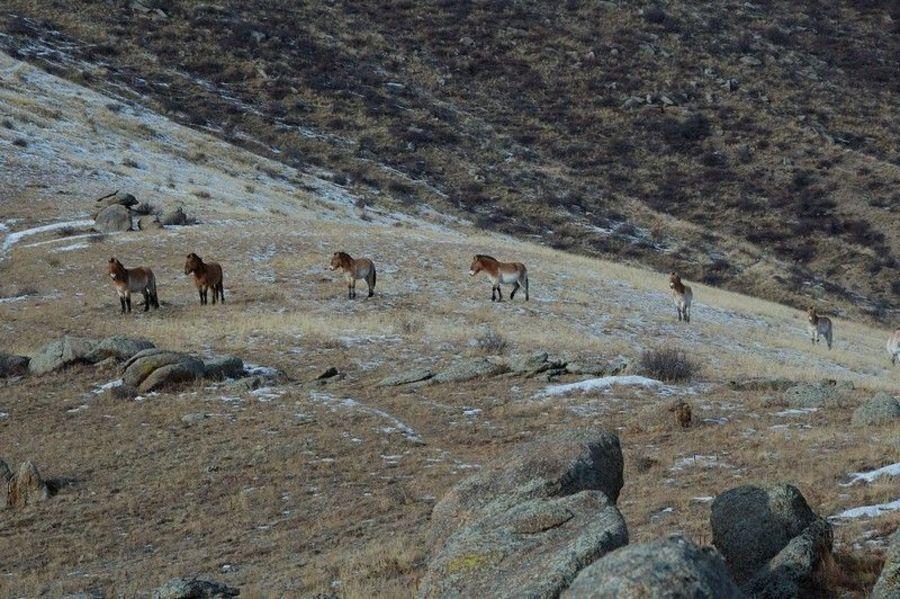 Природный Заповедник Кхустайн Нуруу