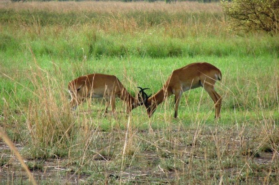 Национальный парк Пенджари
