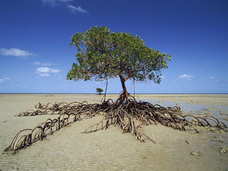 Остров мангровых деревьев