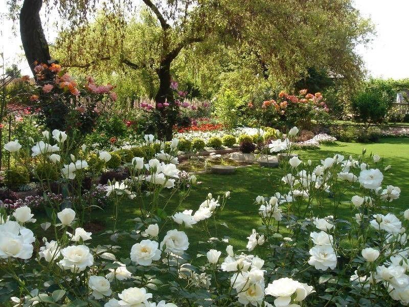 Сад Роз и Жасминов