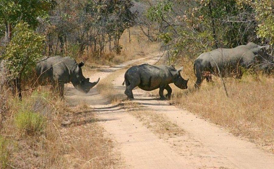 Национальный парк Замбези