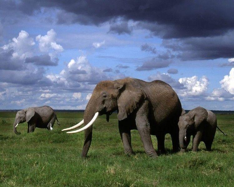 Национальный парк Бубанджида