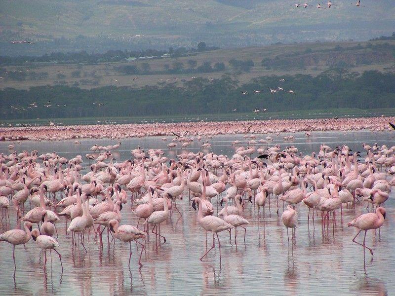 Озеро Баринго