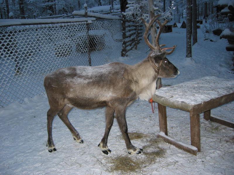 Февральская Финляндия. Оулу, переезд в Рованиеми.