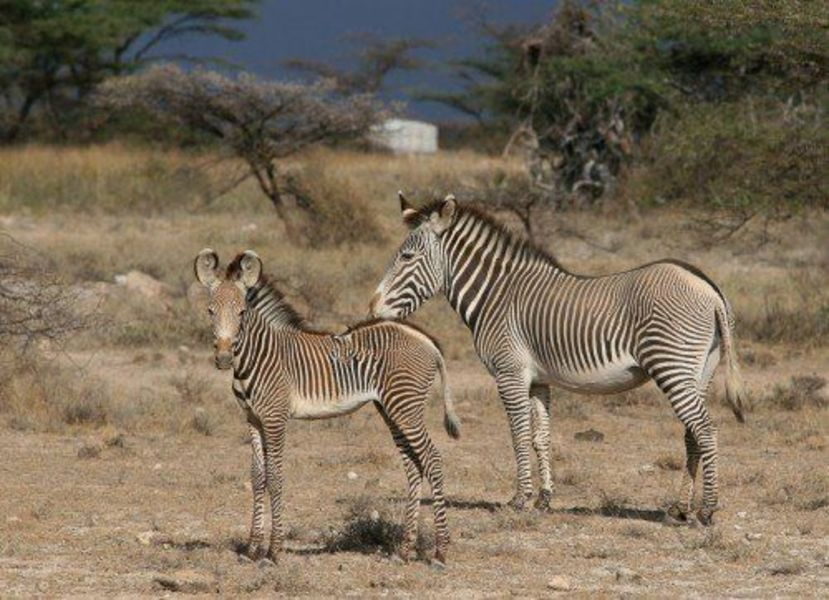 Поездка в Кению