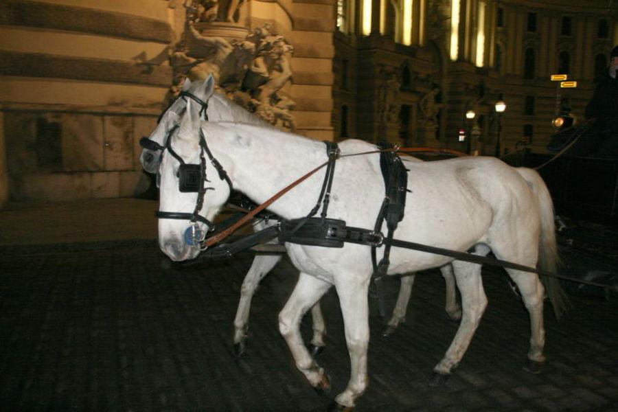 Поездка в Вену. Питания пост