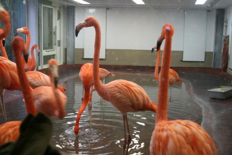 Венский зоопарк