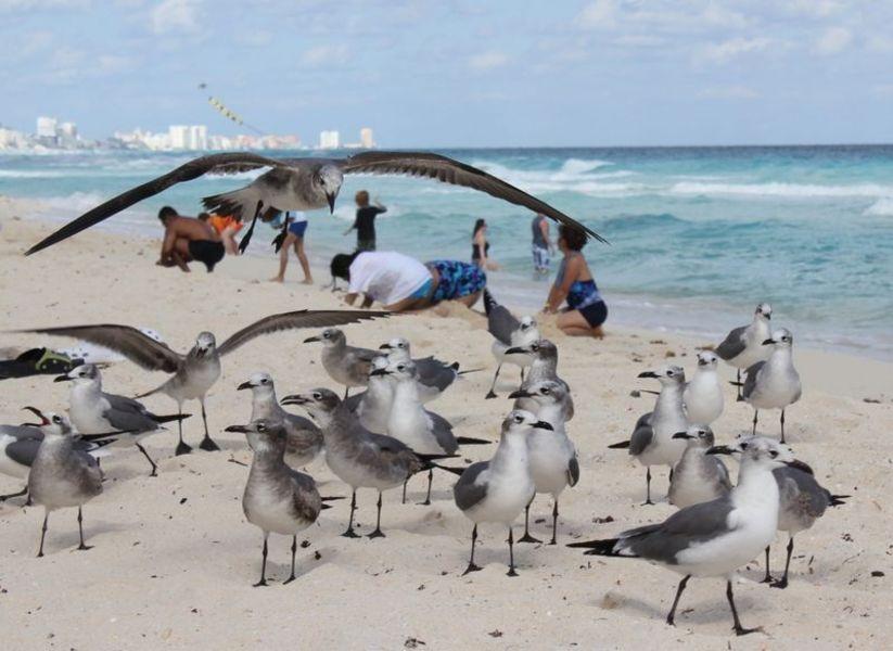 Мексика, море, кокосы и чайки