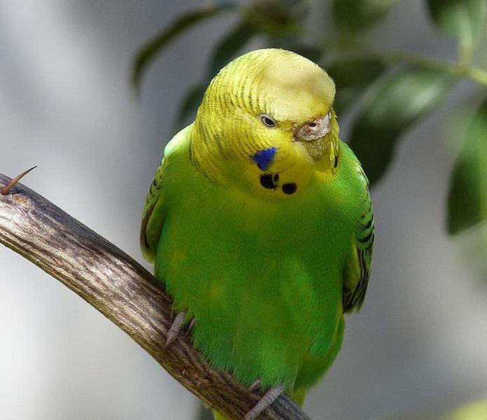 Икитос - жемчужина Амазонки