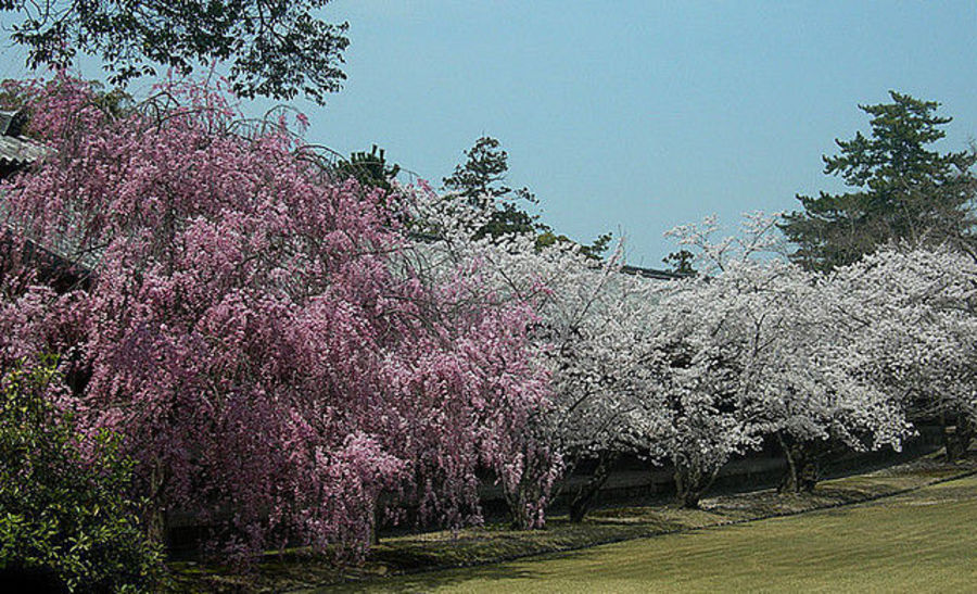 Нара - колыбель Японской культуры