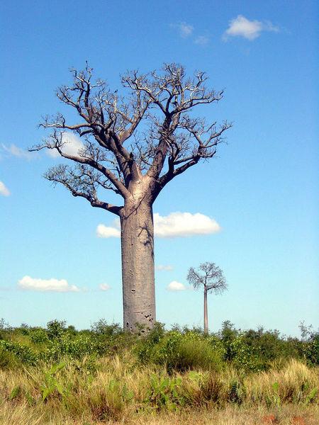 «Новый» - значит Мадагаскар