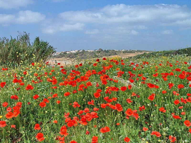 Прекрасный остров Сицилия