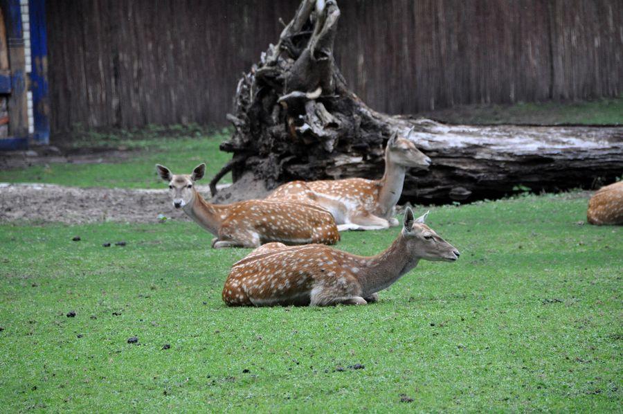 Вроцлав - зоопарк и Spice India