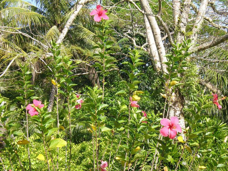 Марианские острова и Сусупе