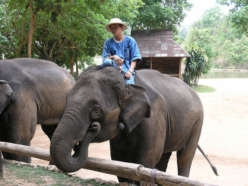 Лампанг город слонов и ананасов