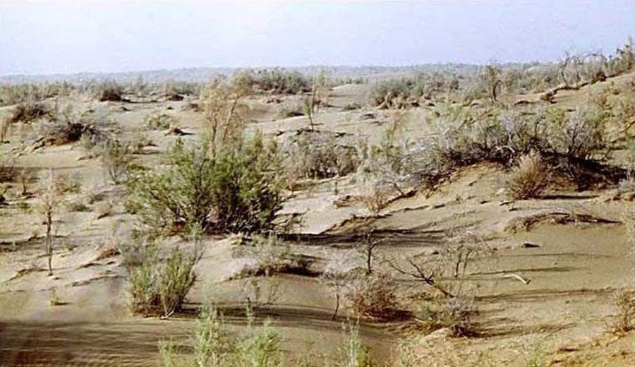 Биосферный резерват Репетек