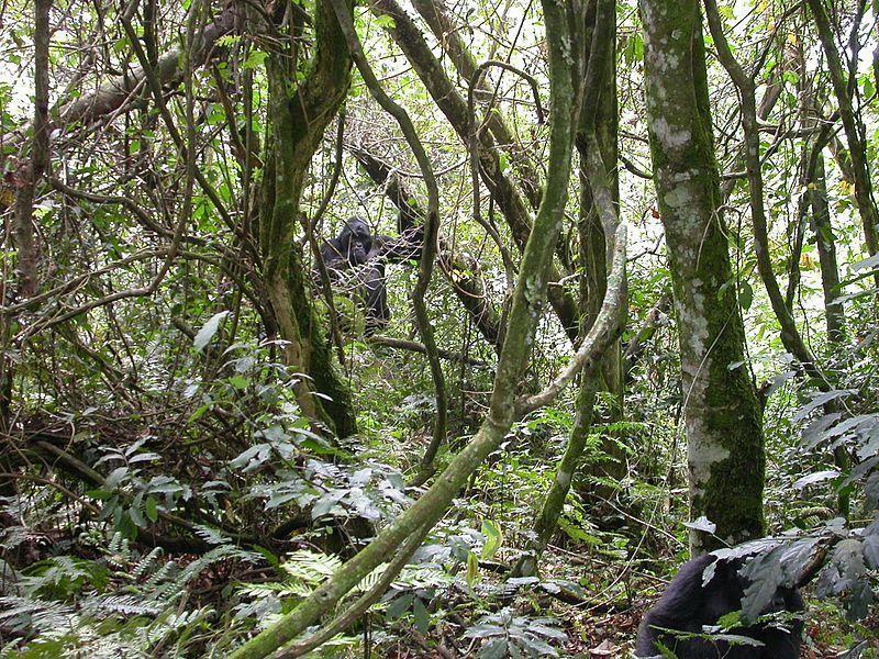 Национальный Парк Бвинди