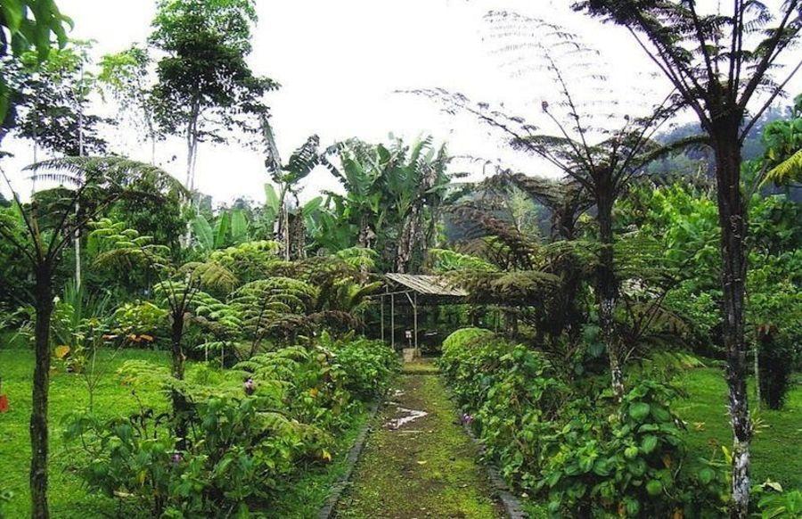 Ботанический сад Бум Сакесу