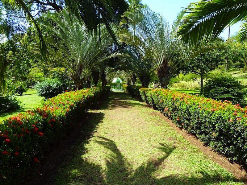 Ботанический сад, Кингстаун