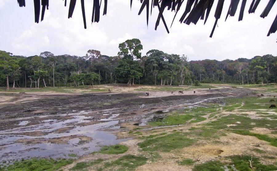 Национальный парк Дзанга-Ндоки