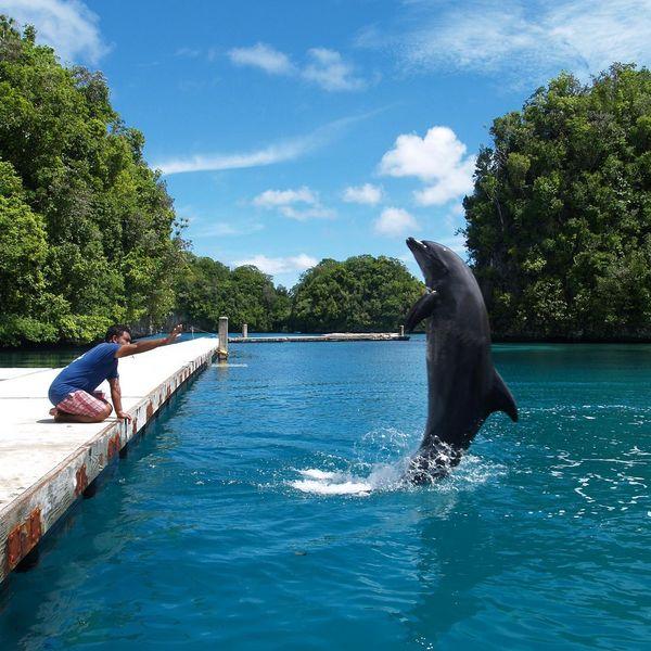 Центр дельфинов