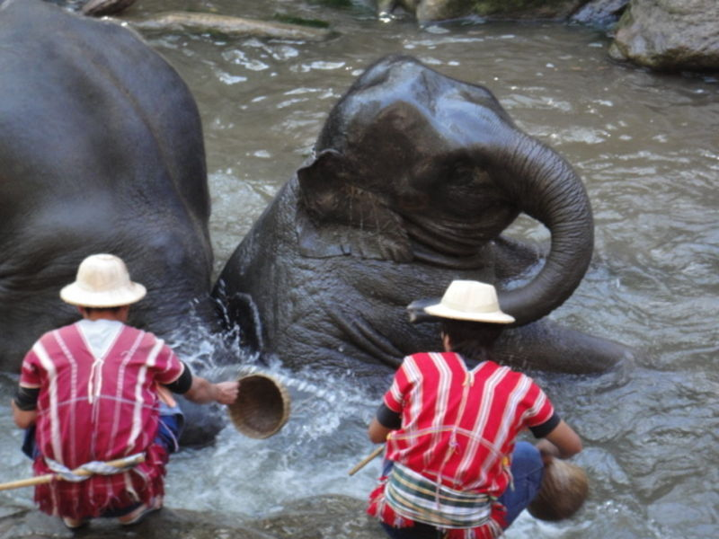 Чиангмай: деревня слонов и ферма орхидей