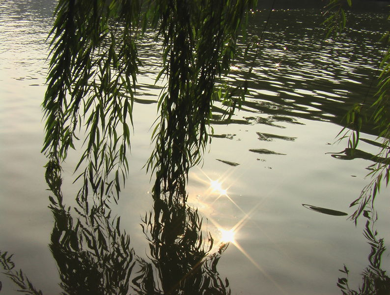 «Коричный лес» - Гуйлинь
