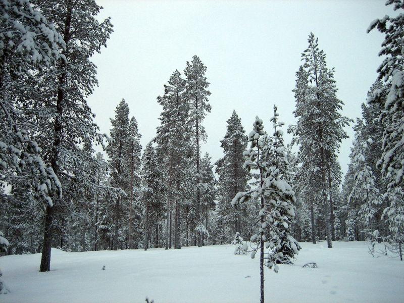 Зимняя сказка Леви