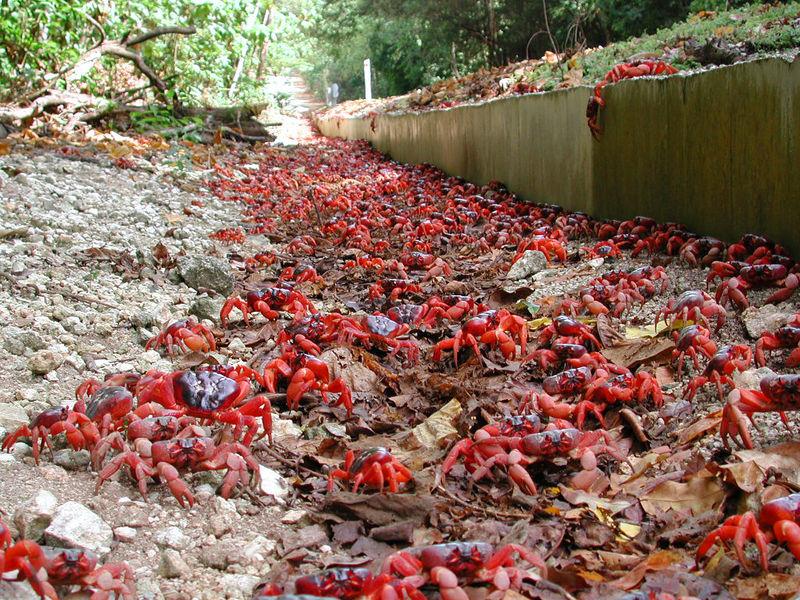 Земля красного краба