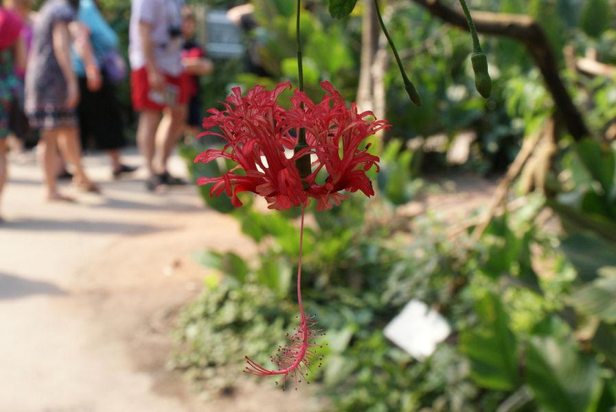 """Ботанический сад """"Эдем"""""""