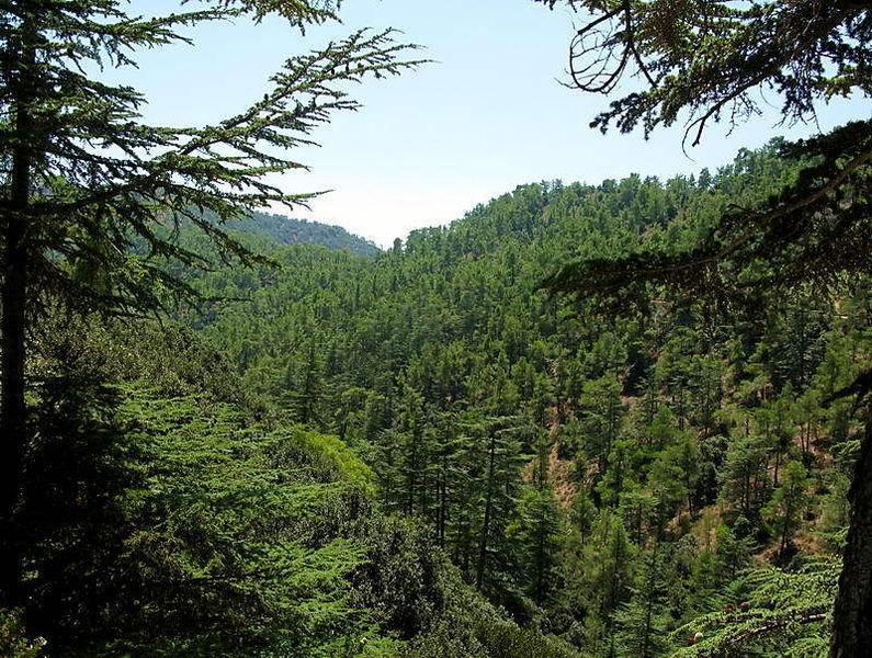 Долина Кедар