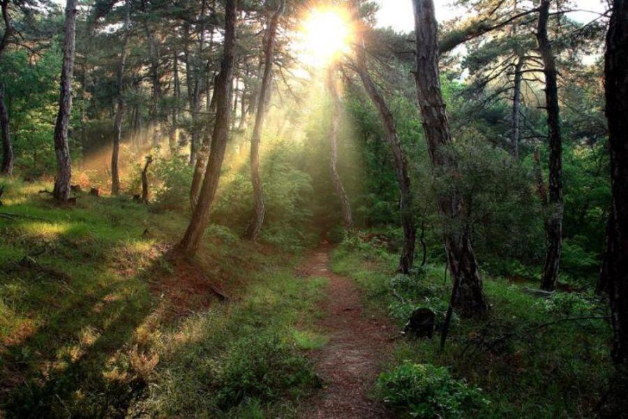 Лес Дадья