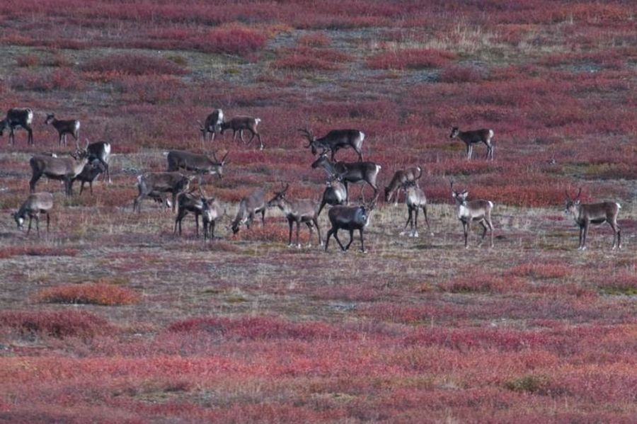 Национальный парк Ворота Арктики