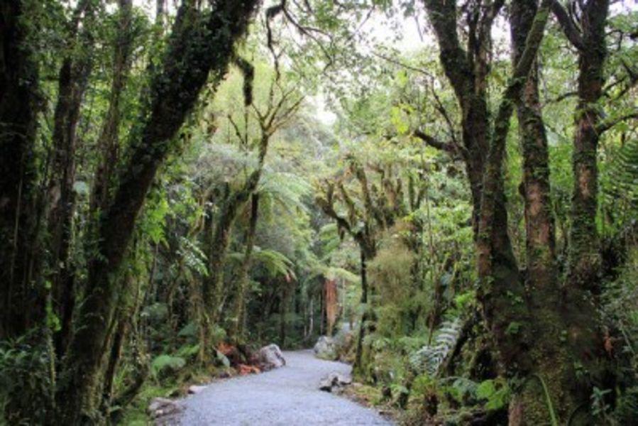 Национальный парк Тай