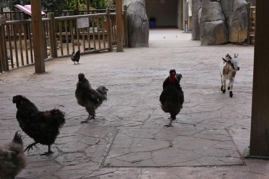 Зоопарк Faunia в Мадриде