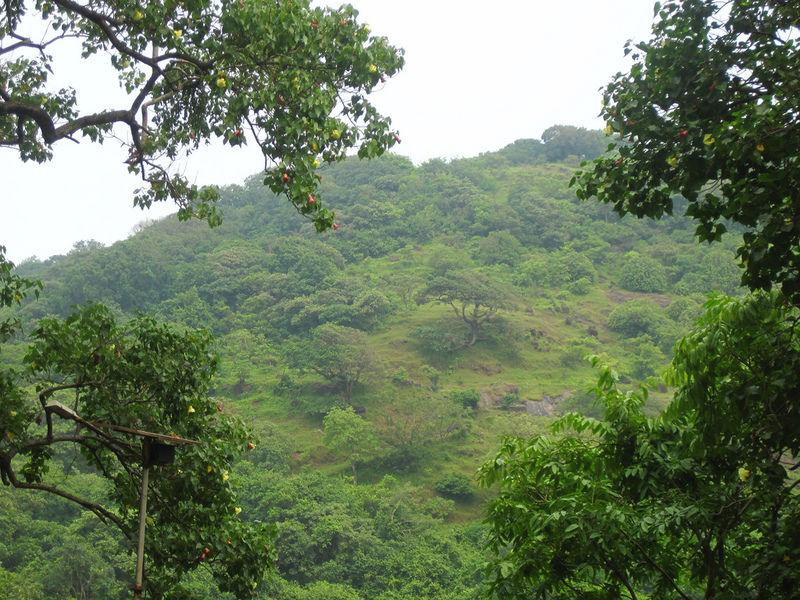 Слоновий остров, Индия
