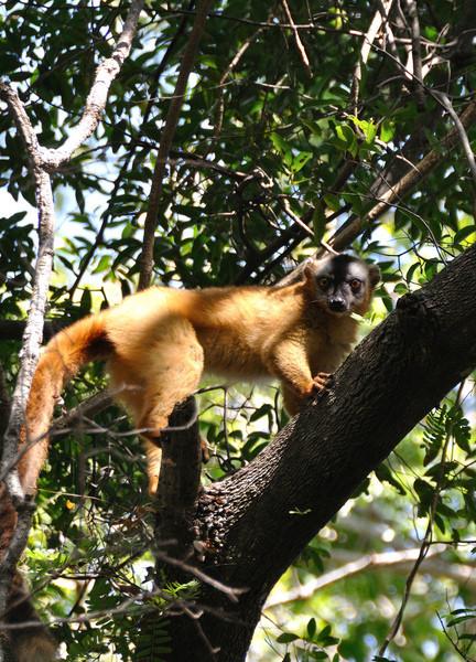 Путешествие в Мадагаскар. Как это было