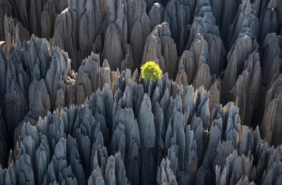 Каменный лес (Цинги-де-Бемараха)