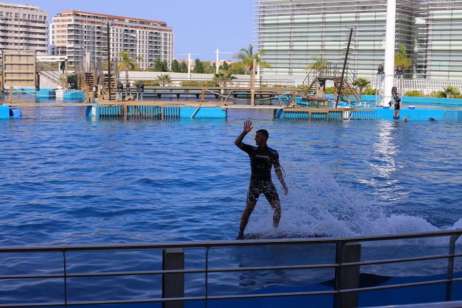 Океанографик. Валенсийский аквариум и дельфинарий