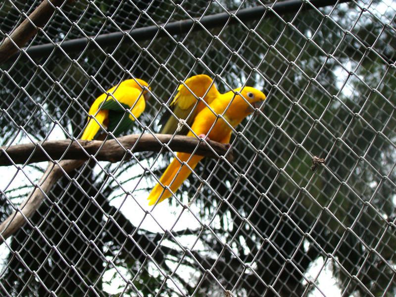 Зоопарк и ботанический сад Белу-Оризонти