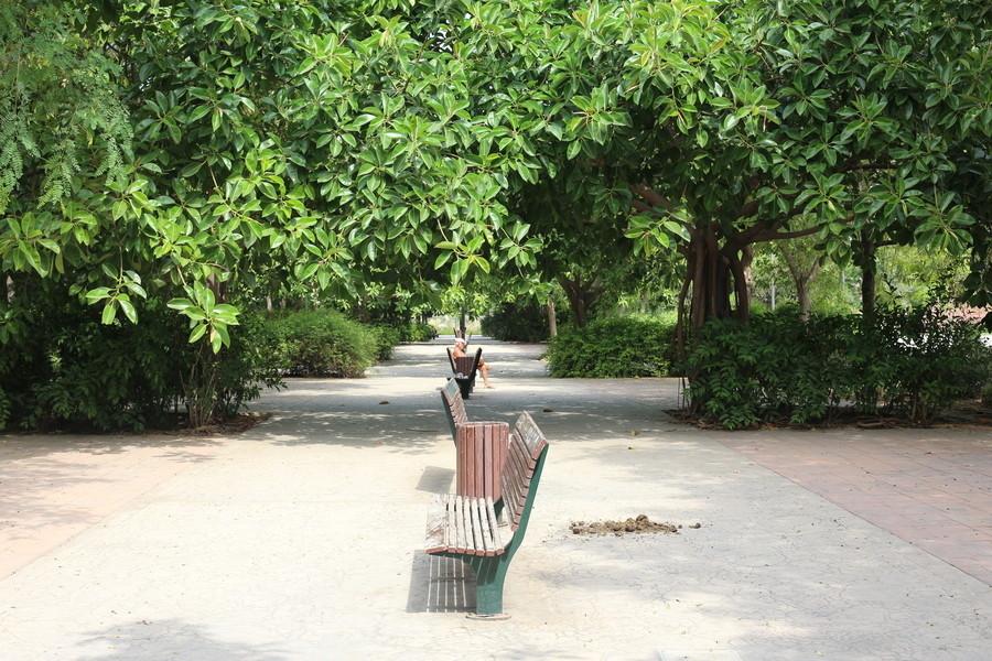 Сады у реки Турия